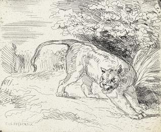 Tigre en Arrêt.
