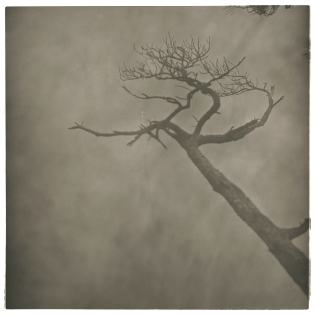 , 'Fog Branch No.1,' 2008, see+ Gallery