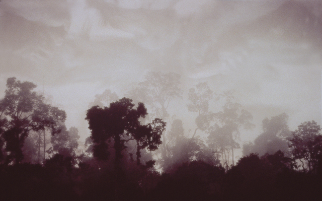 , 'The Forest 1,' 2000-2001, MARS