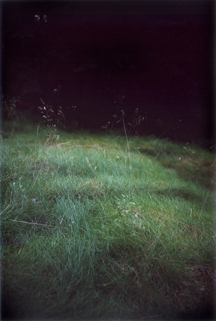 , 'Forest #6, Untitled (Singing Grass),' 2004, Yancey Richardson Gallery
