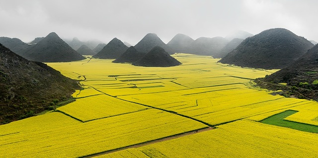 , 'Canola Fields, Luoping, Yunnan Province, China,' 2011, Bryce Wolkowitz Gallery