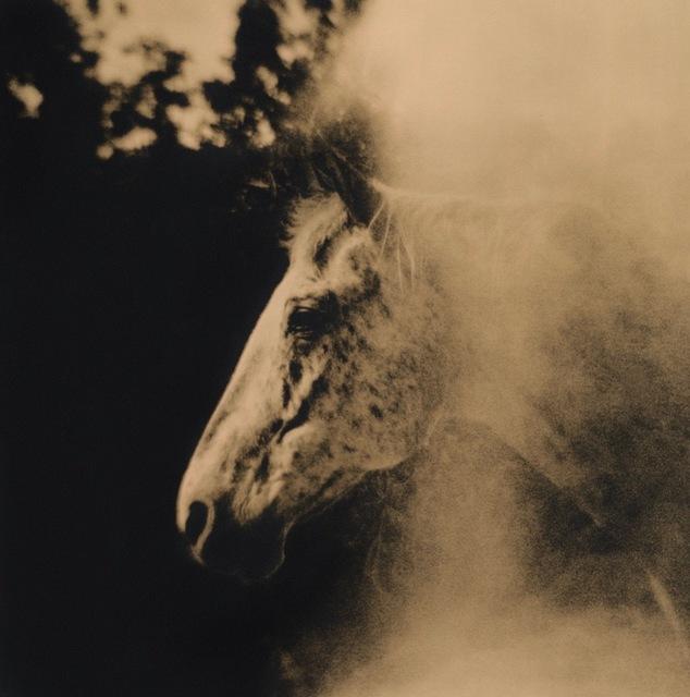 Lara Porzak, 'Freckles', 2014, The Spaceless Gallery