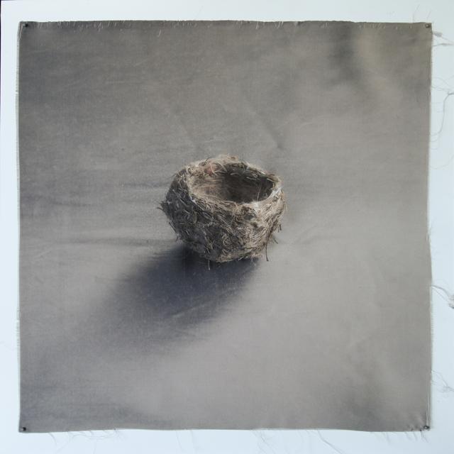 Kate Breakey, 'Nest 35', 2010-2019, photo-eye Gallery