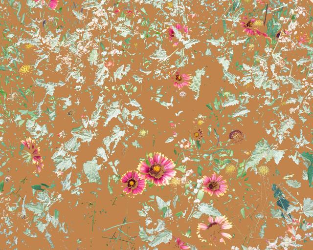 Aaron ROTHMAN, 'Wildflowers (PW1)', 2015, Rick Wester Fine Art