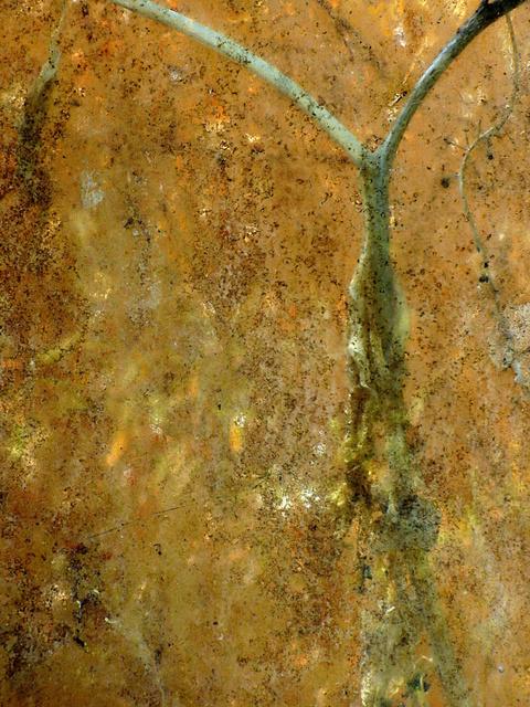, 'Jardin intérieur n°5 ,' , Photo12 Galerie