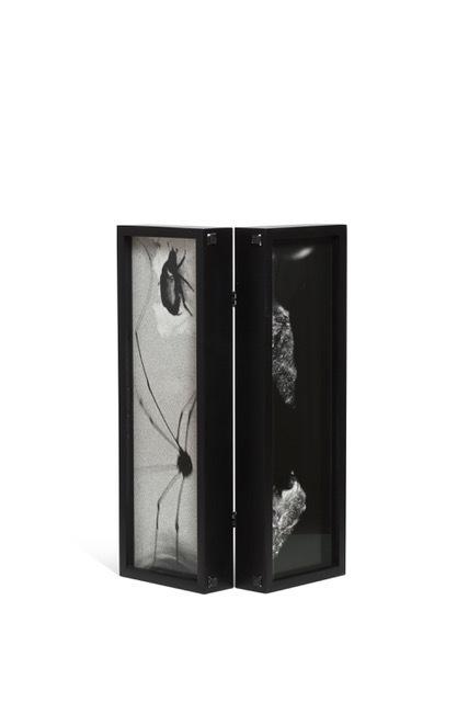 , 'Box: Spider Beetle,' 1989, CFHILL