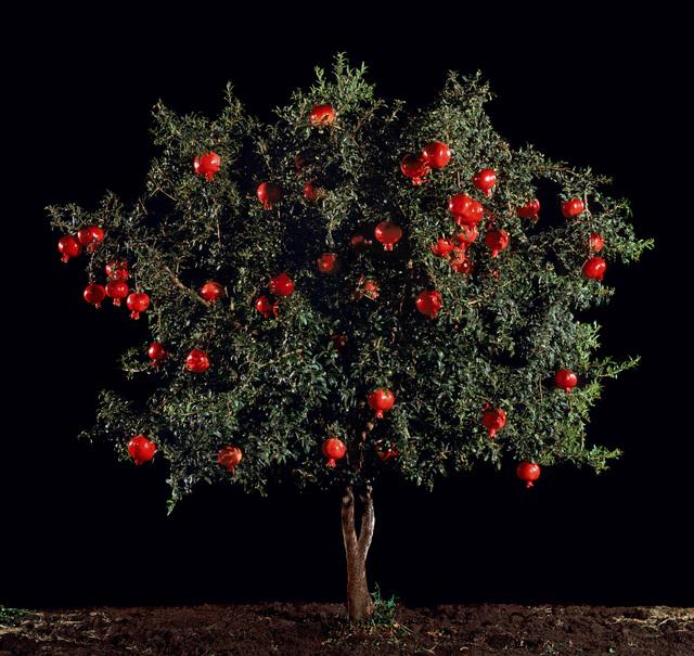 , 'Rimon (Pomegranate),' 2010, Meislin Projects