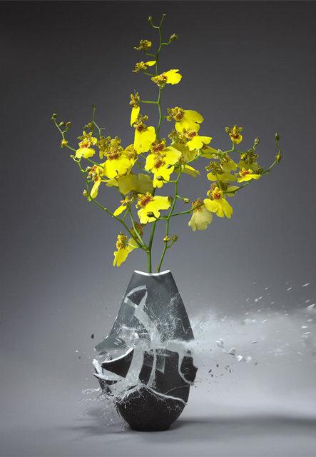 , 'Orchidaceae VII,' 2010, Foley Gallery