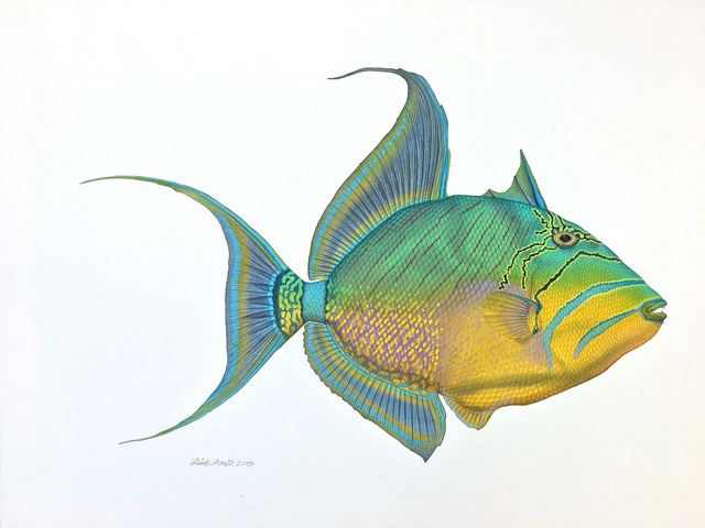 , 'Queen Triggerfish,' 2016, Quidley & Company