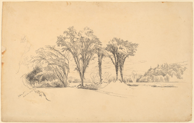 Aaron Draper Shattuck, 'Elms at Stowe, Vermont', 1858, Drawing, Collage or other Work on Paper, Graphite, National Gallery of Art, Washington, D.C.