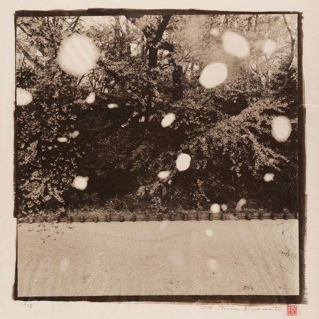 , 'Petals Faling, Moat of Hirosaki Castle 1, Aomori,' 2014, Micheko Galerie