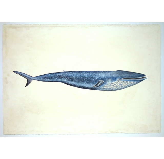 , 'Whale Shark,' 2013, G. Gibson Gallery