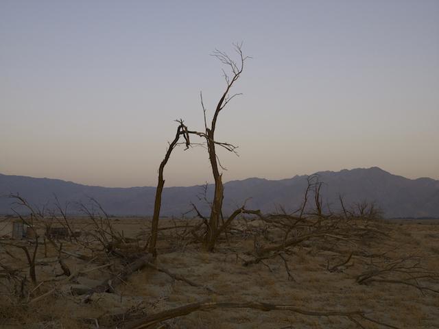, 'Dead Trees, Anza Borrego Desert, California,' 2008, Marc Selwyn Fine Art