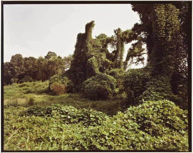 , 'Untitled (Kudzu, Hale Country),' , David Lusk Gallery