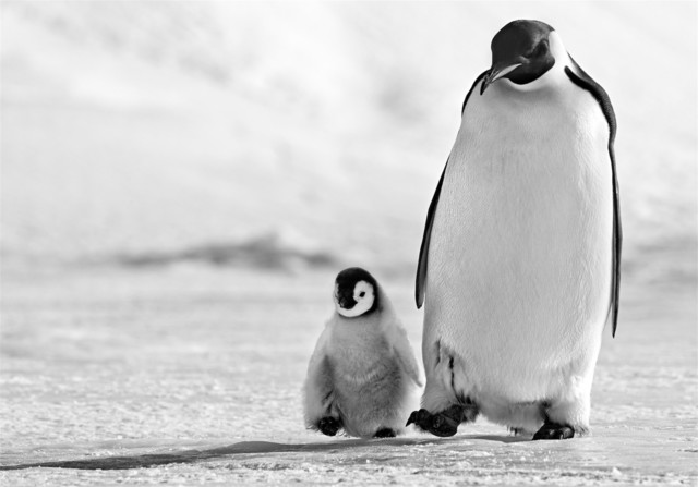 David Yarrow, 'Father and Son', 2010, Photography, Archival Pigment Print, Hilton Asmus