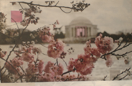 , 'Cherry Blossoms at the Jefferson Memorial,' 2010, Zenith Gallery