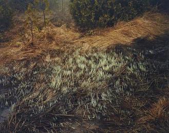 Grasses, Bruce Peninsula