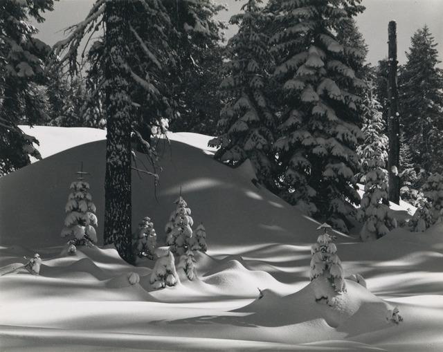 , 'Winter Forest Near Badger Pass, Yosemite, California,' 1948, Scott Nichols Gallery