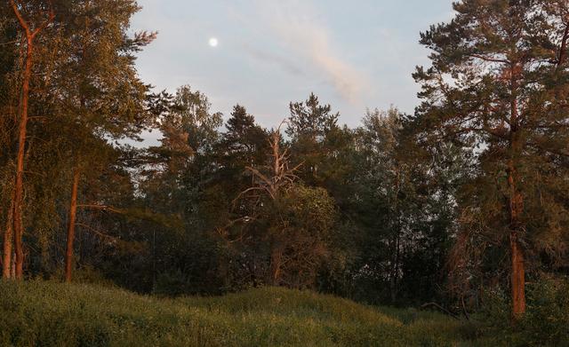 , 'Landscape Painting (Forest),' 2016, Sies + Höke