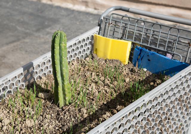 JPW3, 'Food 4 Less', 2020, Mixed Media, San Pedro cactus, wheatgrass, dirt, foam, shopping cart, Night Gallery