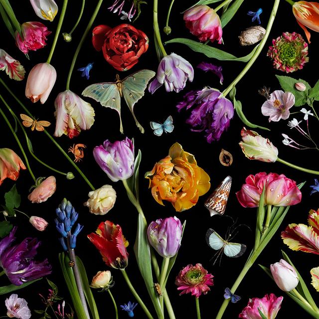 , 'Botanical VII (Tulips),' 2014, Robert Mann Gallery