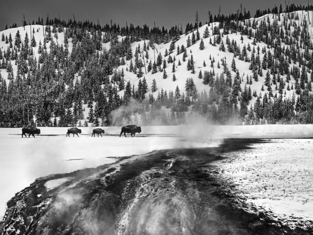 David Yarrow, 'Yellowstone', 2017, Photography, Archival Pigment Print, Hilton Asmus