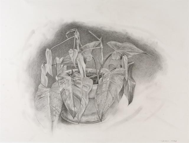 Eric Green, 'Plant', 1993, Dowling Walsh
