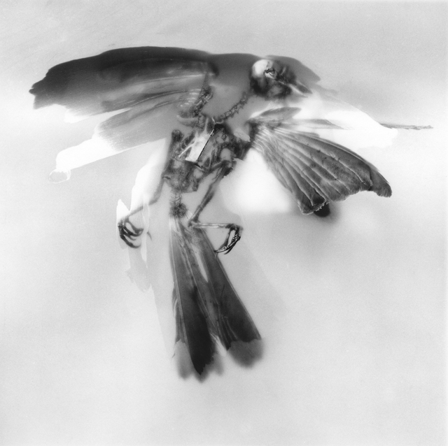 Rebecca Palmer, 'Painted Bird, from the series Meditations', 2012, Circuit Gallery