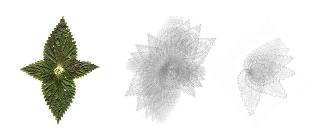 , 'Jardín de la consciencia,' 2015, Alarcón Criado