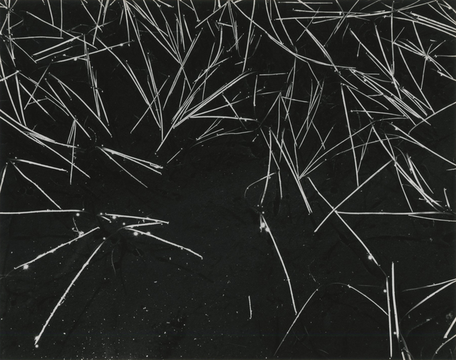 , 'Grass and Pool,' 1935, Photography West Gallery