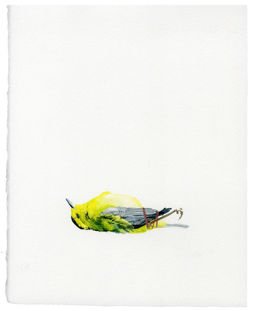 , 'Untitled (Roadkill Series),' 2014, Subliminal Projects