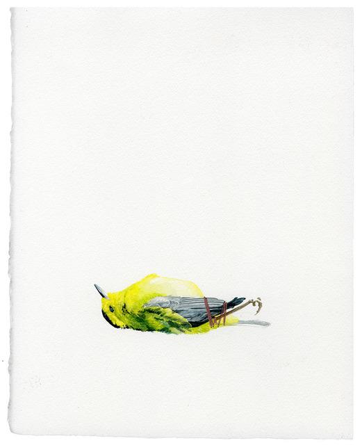 Tara Smith, 'Untitled (Roadkill Series)', 2014, Subliminal Projects