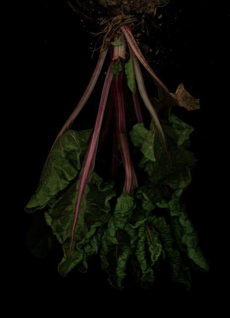, 'Mangold (Beta vulgaris),' 2018, Galerie Judith Andreae