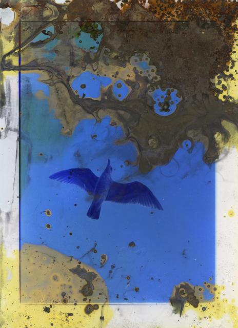 , 'Untitled IX (Lunar Caustic),' 2014, Flowers