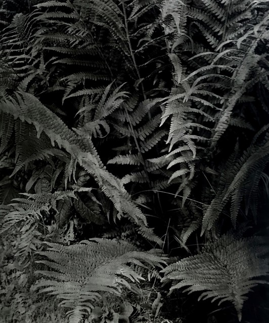 , 'Fougère Farm,' 2018, Galerie Arcturus