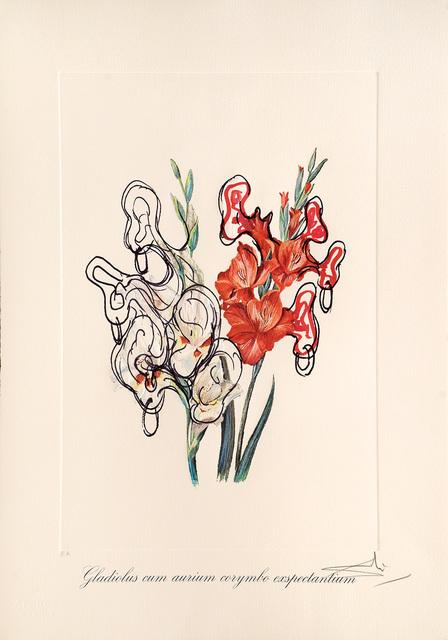 Salvador Dalí, 'Gladiolus cum aurium corymbo expectantium. (Pirates Gladioli.)', 1972, Peter Harrington Gallery