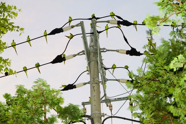 , 'Tokyo Parrots 008,' 2013, IBASHO
