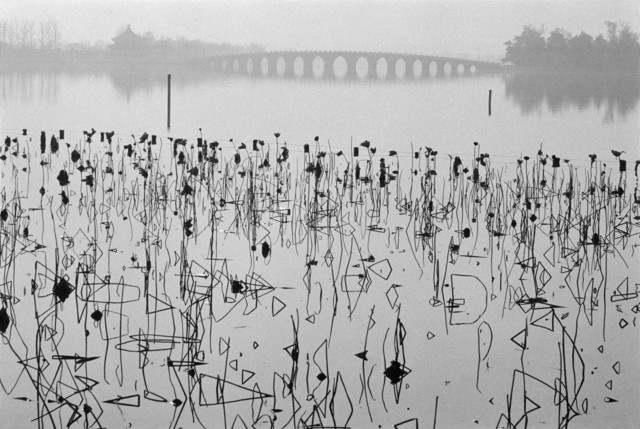 , 'CHINA. Beijing. Former Summer Palace. Dead lotus flowers on the Kunming Lake.,' 1964, Magnum Photos