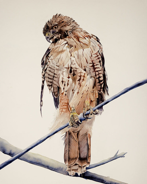 , 'Red-Tailed Hawk,' 2018, Wally Workman Gallery