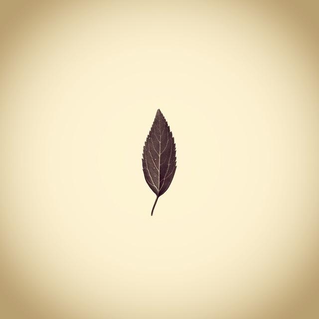 , 'Leaf,' 2013, Panopticon Gallery