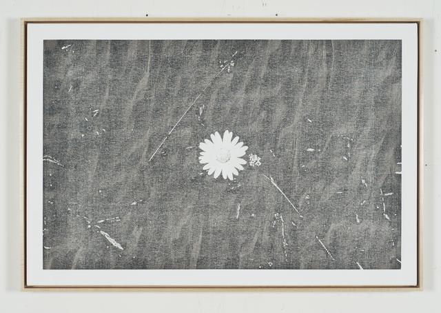 , 'Static Image Painting/Grey/Wildflower/Wildwood Road/Hampstead/London/Walking Back From Heathwood/Two,' 2015-2016, Wilding Cran Gallery