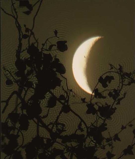 , 'Crescent Moon, Ivy,' 2002, Danziger Gallery