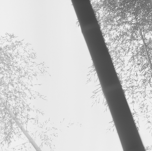 Choi Byung-Kwan, 'Bamboo Grey #1', 2017, ElliottHalls