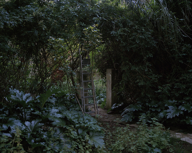 , 'Garden in the villa of Elena Prentice, in the Montagne district,' 2016, Galerie Clémentine de la Féronnière