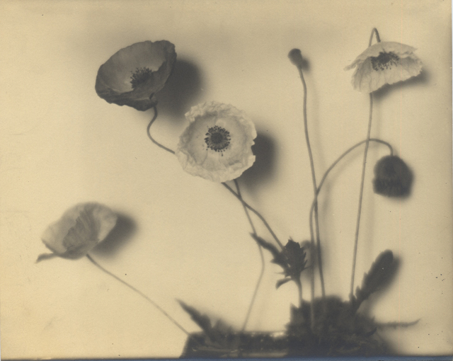 , 'Flower Studies,' ca. 1920, Robert Mann Gallery