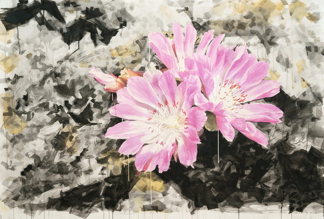 , 'Lewisia with Crystal Background,' 2016, Elizabeth Houston Gallery