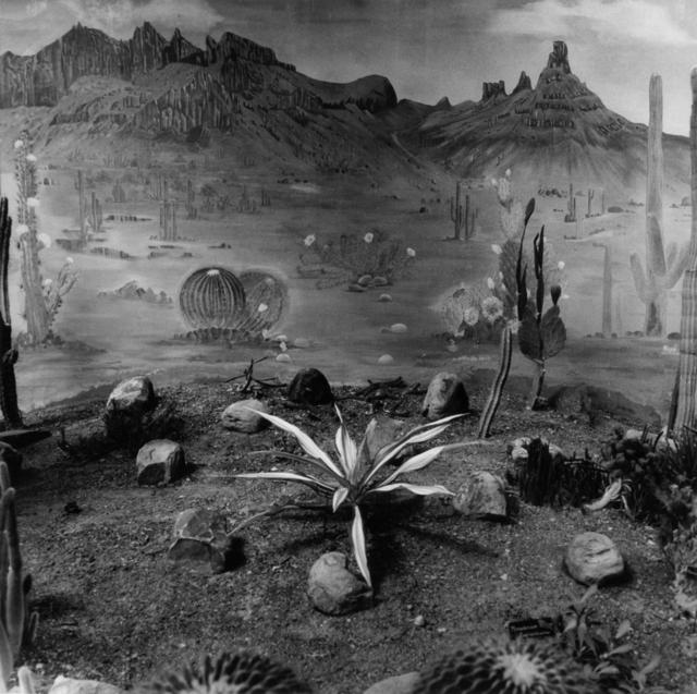 Graciela Iturbide, 'Jardín botánico, Lucknow, India', 1999, Etherton Gallery