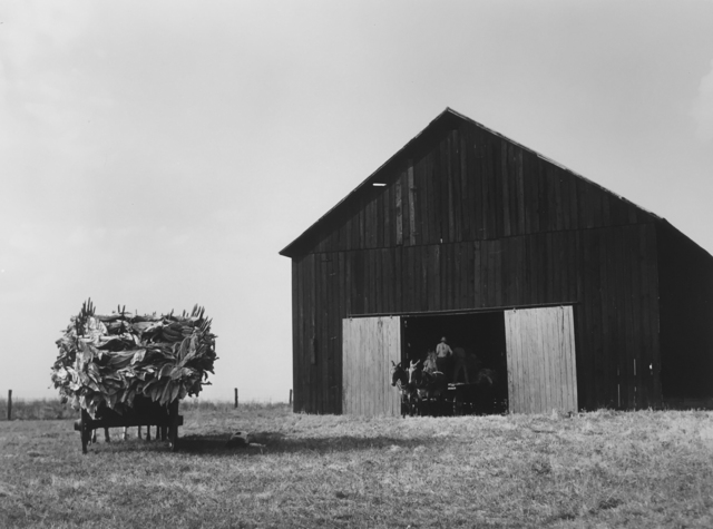 , 'Wagons deliver tobacco to a barn on the farm of Russell Spears, New Lexington, Kentucky,' 1940, G. Gibson Gallery