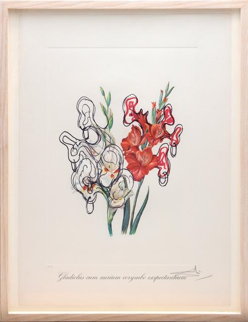 Salvador Dalí, 'Gladiolus cum aurium corymbo expectanium (Pirates Galdioli) (From the portfolio Surrealist Flowers)', 1972, Artsnap