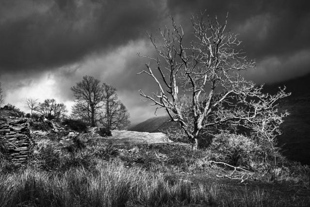 , 'Strom tree / Arbol de la tormenta  ,' 2015, Jacaranda Images